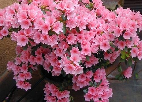 plantas para jardim muito sol:Cinco flores que conseguem resistir ao tempo seco