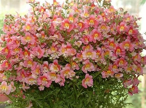 Cinco flores que conseguem resistir ao tempo seco  Verdy Vasos
