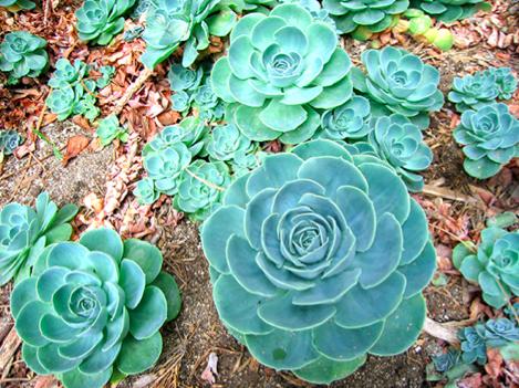 Quer deixar quem visita o seu jardim de boca aberta for Plantas para estanques pequenos
