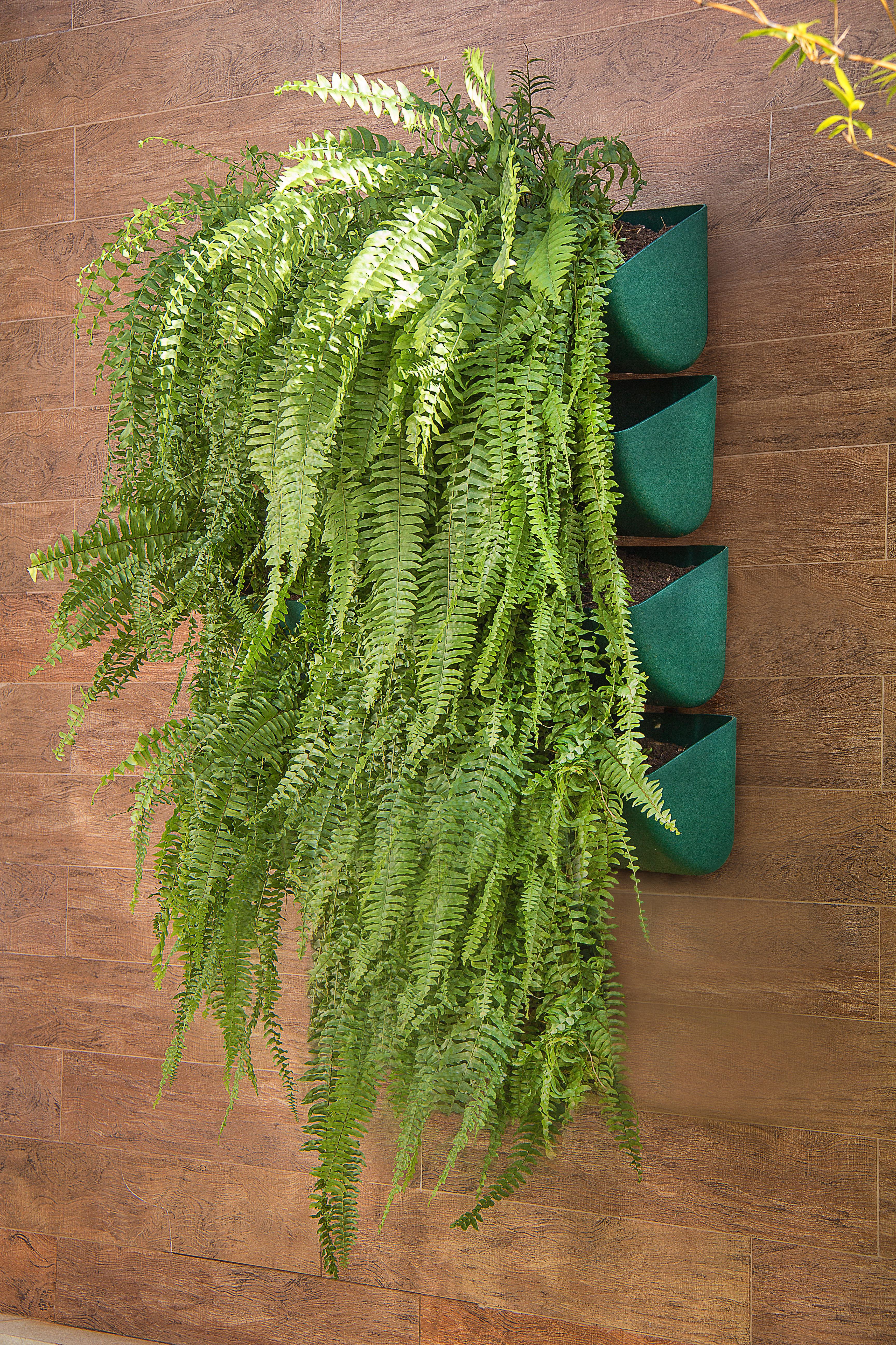jardim vertical tubo pvc:pai dos JARDINS VERTICAIS