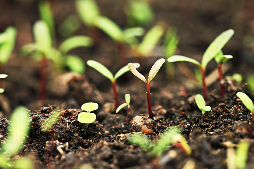 _vasos Pequenos_vasos Grandes_passo A Passo_montando Mini Jardim~ Mini Jardins Passo A Passo