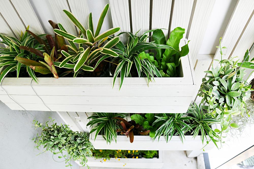 fotos jardim horizontal : fotos jardim horizontal:Existem diferentes técnicas para montar um jardim vertical e para