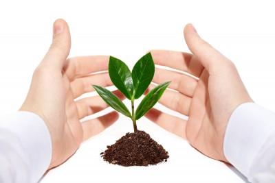 cuidado-com-as-plantas-o-que-nao-fazer-verdy-vasos-polietileno
