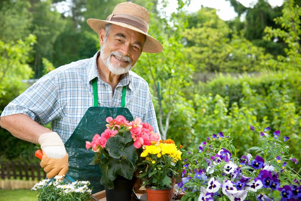 jardineiro-iniciante