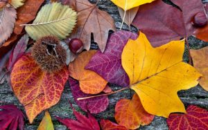 Outono Verdy